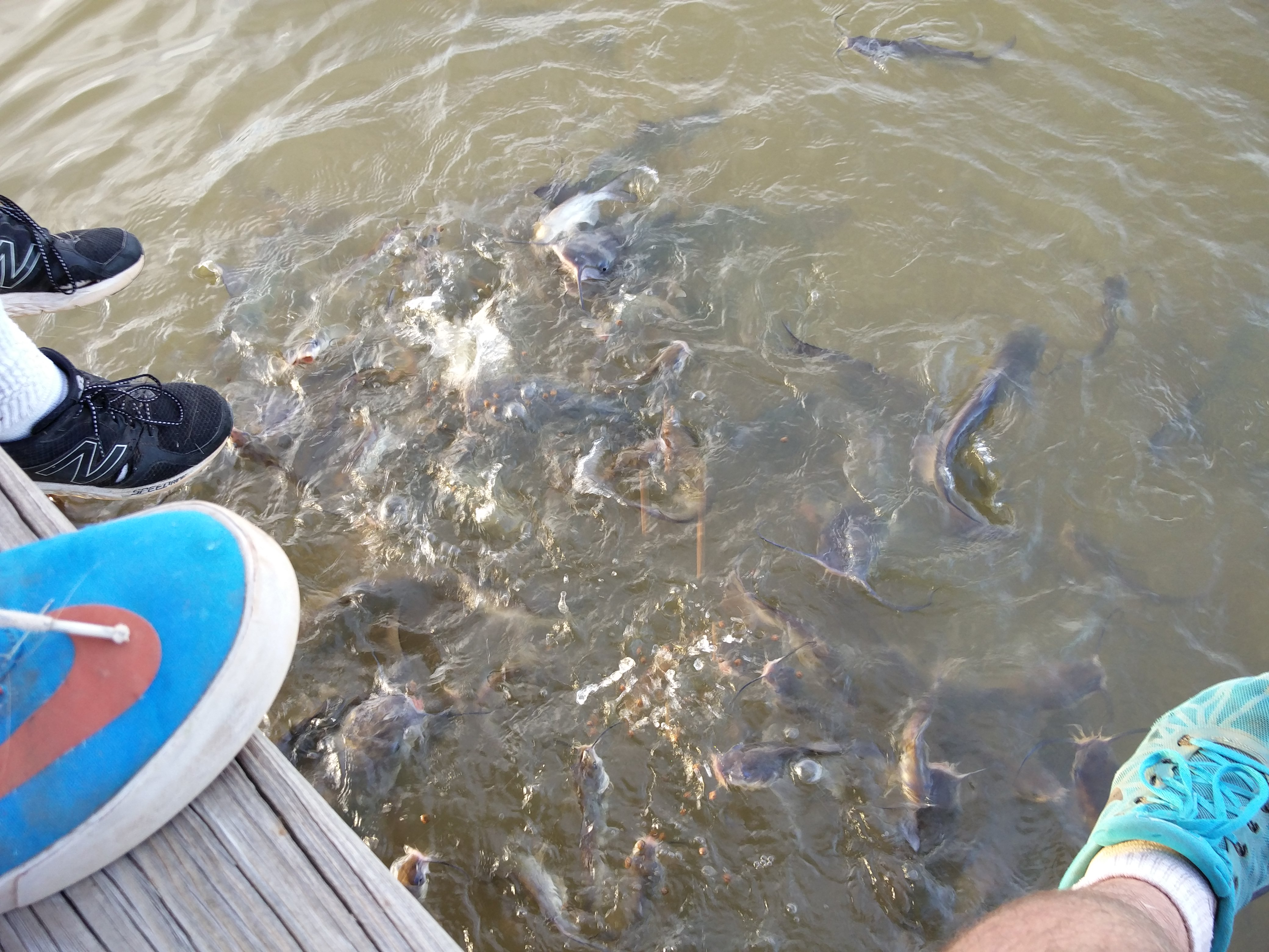 And then there's the ridiculous amount of catfish in the pond.